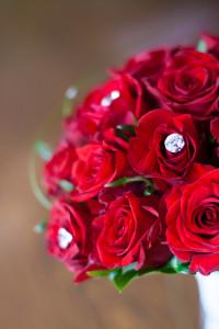 Winter flowers: Roses
